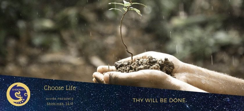 choose life, thy will be done, have it your way, doubting God, painful trial, you are suffering, rejoice, overjoyed, god, goddess, dazzling, radiant, immortal creature, energy, joy, wisdom, love, boundless power, mere human beings, God has been making it grow, earthly life, all religions are true, a better Christian, child of God, relationship with God, personal transformation, eternal life, gift of forgiveness, omnipotent, onmiscient, ever-present God, no other gods, loving God, walking in His ways