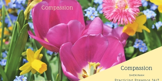compassion, love, mercy, kindness, empathy, understanding , sensitive, charity, heart, generous, balanced, emotions, alignment, aligned, coherence, coherent, gratitude, coach, life coach, transformation, change, heart-centered
