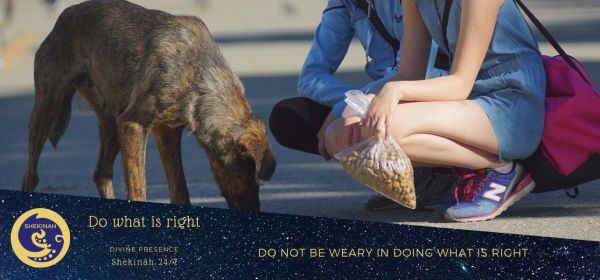 do not be weary in doing what is right, kindness, feed the hungry, work, living in idleness, toil and labor, worked night and day, an example to imitate, unwilling to work, mere busybodies, work quietly, earn their own living